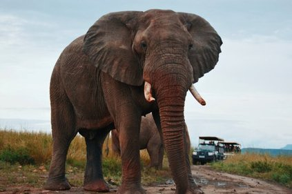 South African Self-Drive Safaris and Holidays