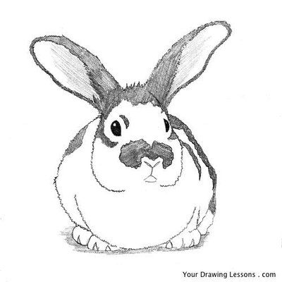 how-to-draw-a-bunny-rabbit-10.large.jpg