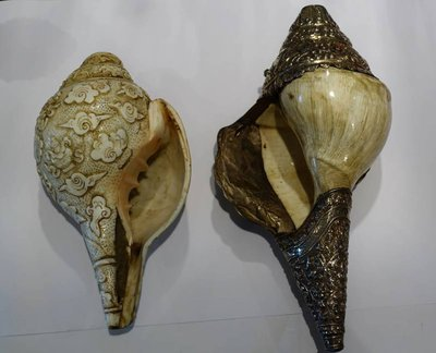left and right (!) turning conch shell