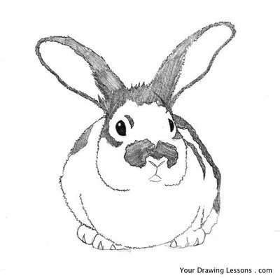 rabbit-pencil-drawing-09.large.jpg