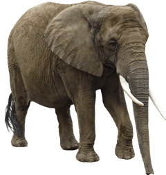 elephant_by_ravenslane-d5s80xp.png