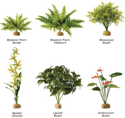 ground-rainforest-plants-1.large.jpg