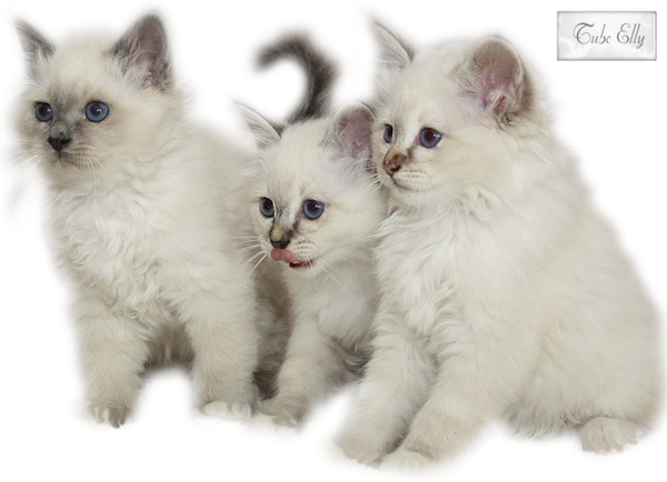 3kittenstubeelly.png