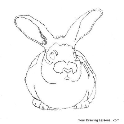 bunny-drawing-08.large.jpg