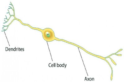 neuron.large.jpg