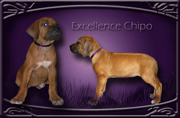 excellence-chipo-01-3.jpg