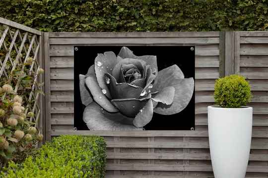 Tuinposter Roos
