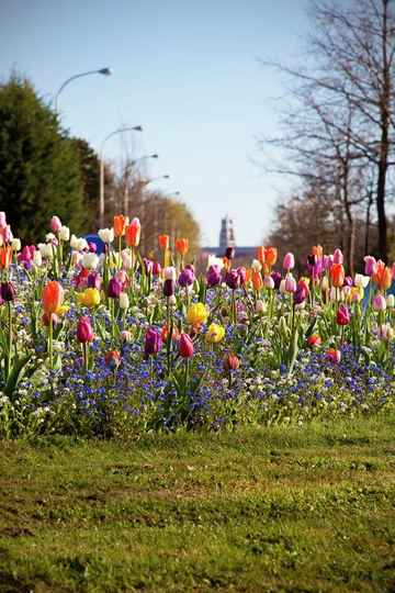 POPPIES AND TULIPS TOUR