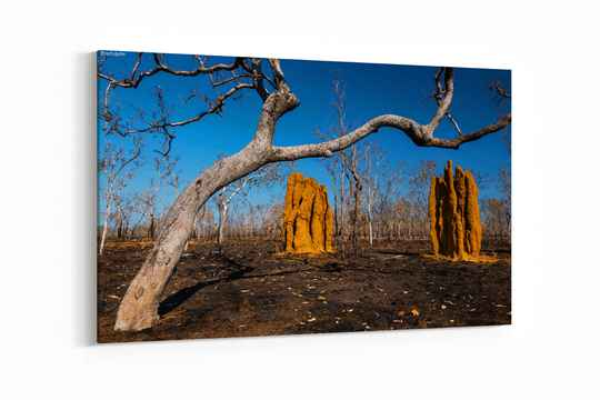 Cathedral Termite Mounds na een bosbrand