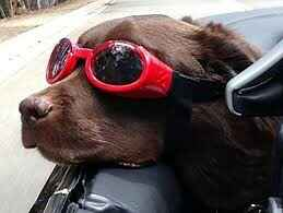 Doggles rood