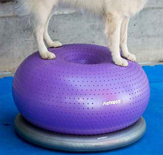 FitPAWS Donut Holder