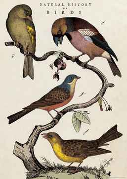 """Cavallini poster """"Natural History of Birds"""""""