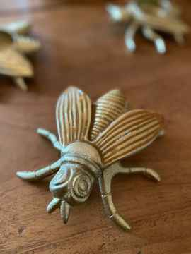 Ornament Insect