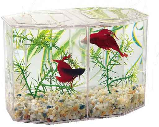 Betta kit large dubbel