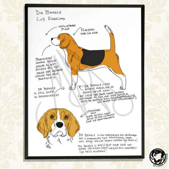 """Beagle print """"Different View"""""""