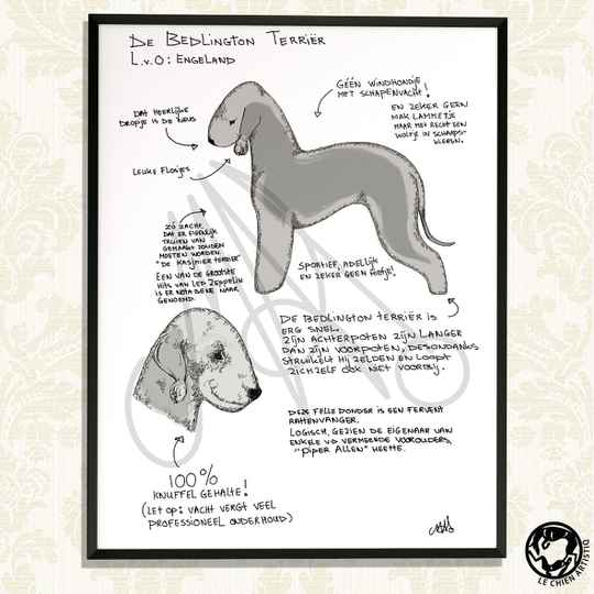 "Bedlington Terrier print ""Different View"""