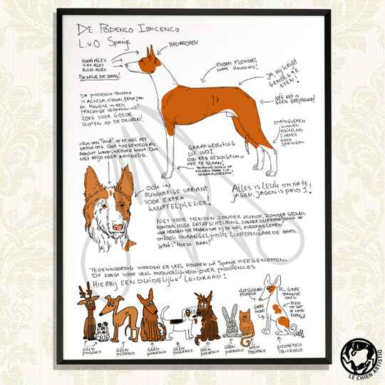 "Podenco Ibicenco print  ""Different View"""