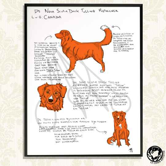 "Nova Scotia Duck Tolling Retriever print  ""Different View"""