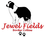Jewel Fields Border Collies