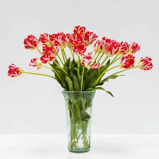 Bouquet of tulips in glass vase