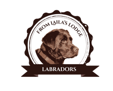 FROM LAILA'S LODGE- LABRADORS