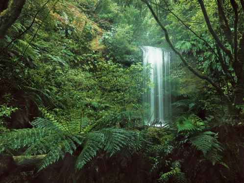 Fotobehang Jungle Waterval - 450 x 280 cm