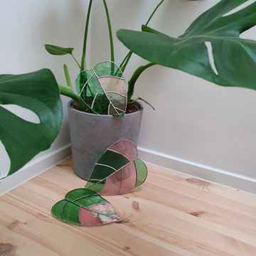 Philodendron - iridescent pink/green