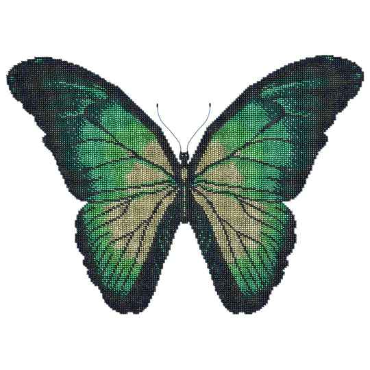 Turqoise butterfly