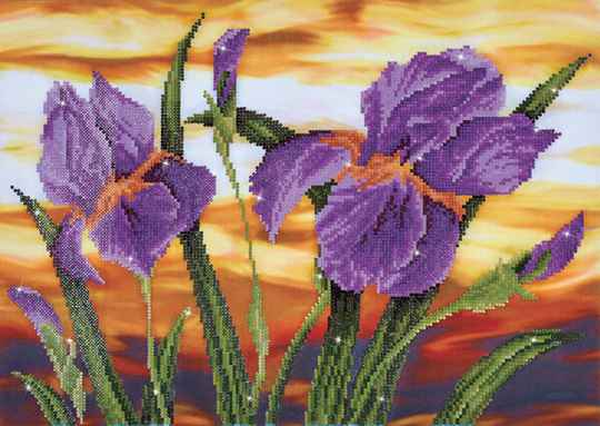 DD9.016 iris sunset 52x37