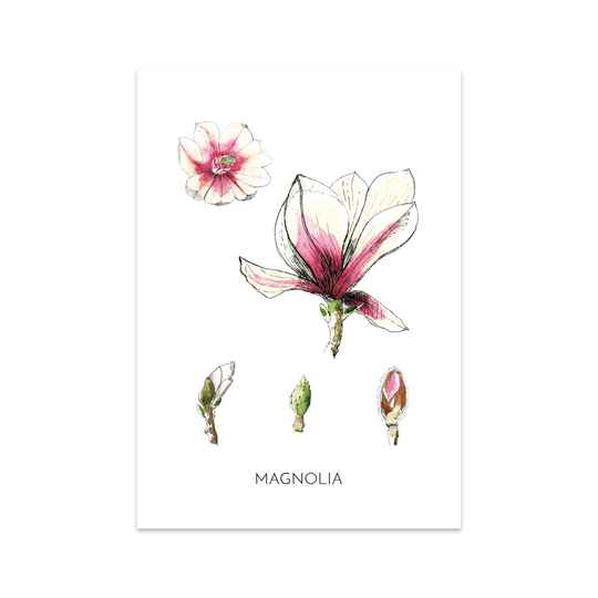 Magnolia - Art Card