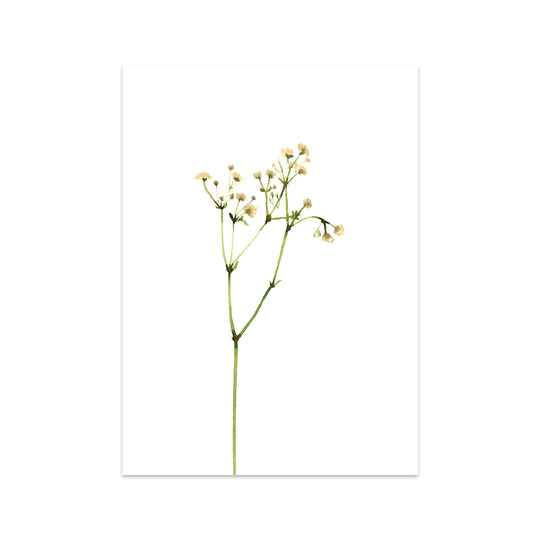 Lovely Gypsophila kaart