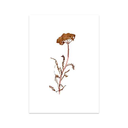 Dancing Dried Flower A4 Print