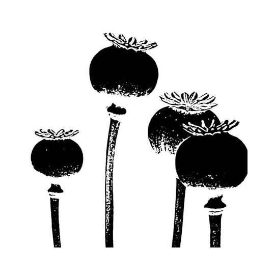 IC-ST-FRPOP four poppies