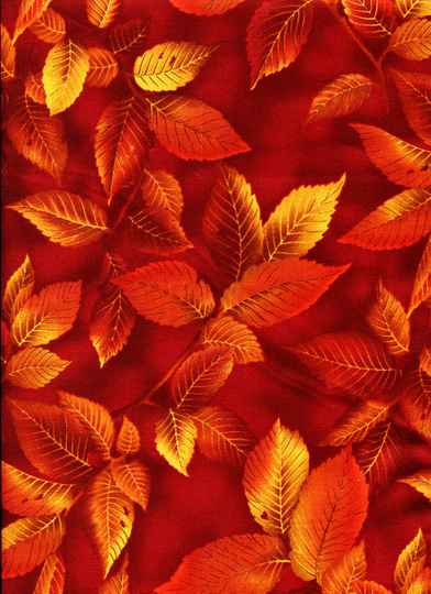 Nature Leaves in autumn