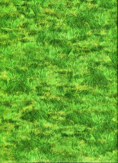 Nature Grass of home