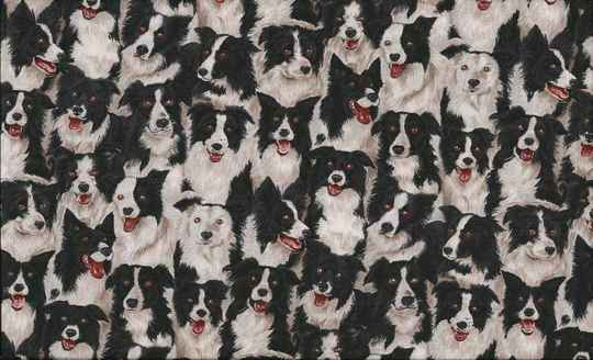 Cats and dogs Border-Collies