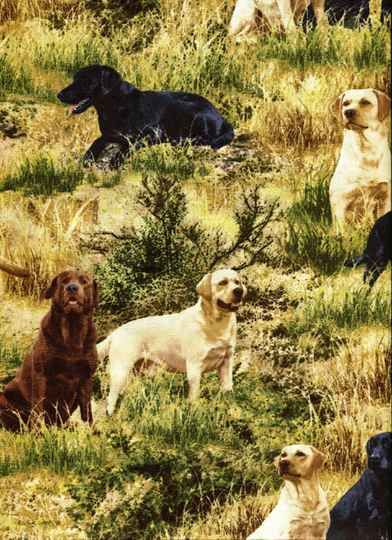 Cats and dogs Labradors in grass