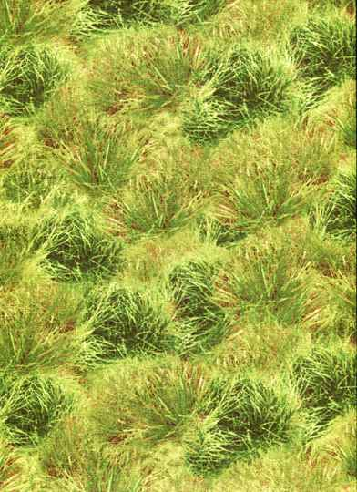 Nature grass with earth