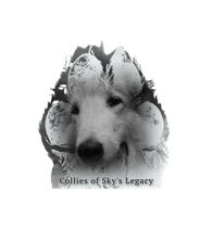 Collies of Sky´s Legacy