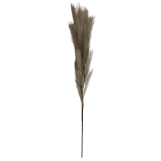 TAUPE PLUMES