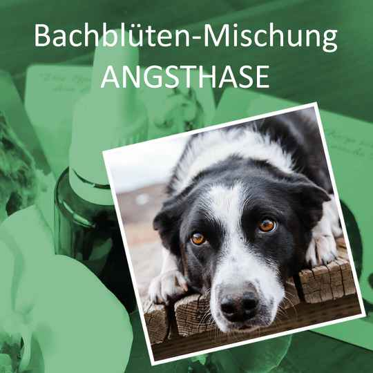 Bachblütenmischung Angsthase, 30 ml