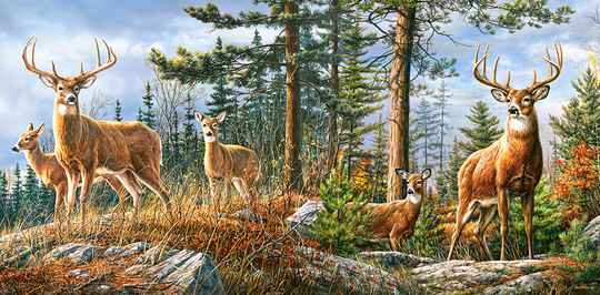 Royal Deer Family -  Puzzle 4,000 pieces Gs15029