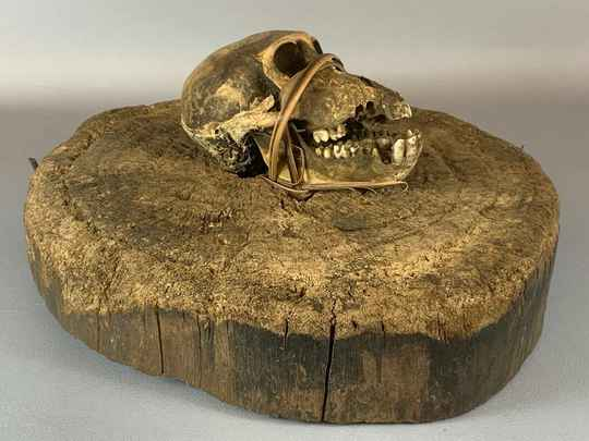 210238 - Old, Tribal Used Fetiche Yombe ritual block with animal skull - Congo.