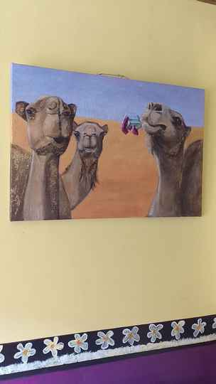 My camels are coming!