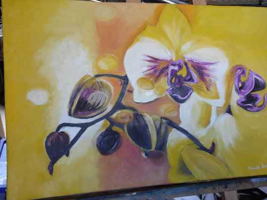 Orchidee - orchid (Code: A1 - 023)