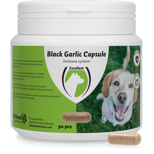 Black Garlic capsule Hond