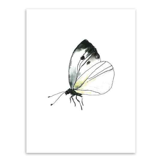 Print A4 - Butterfy, Cabbage Butterfly