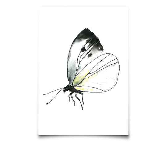 Card A6 - Cabbage Butterfly