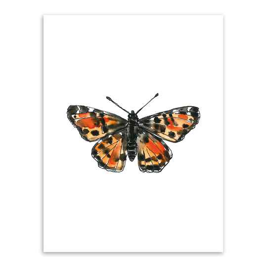 Print A4 - Butterfly, Map butterfly