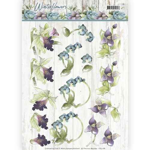Winter Flowers - Orchids - CD11188